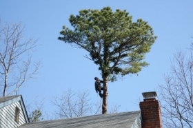 Phillips Tree Service